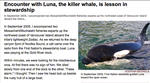 Encounter With Luna The Killer Whale